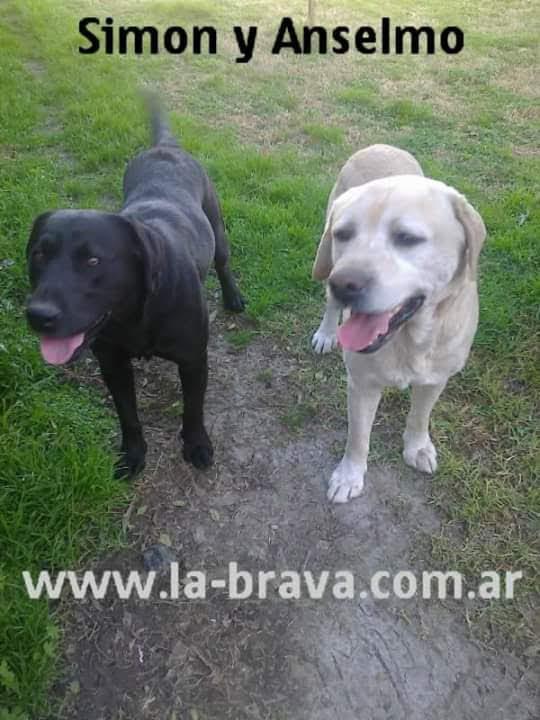 pension canina la brava mascotas (92)