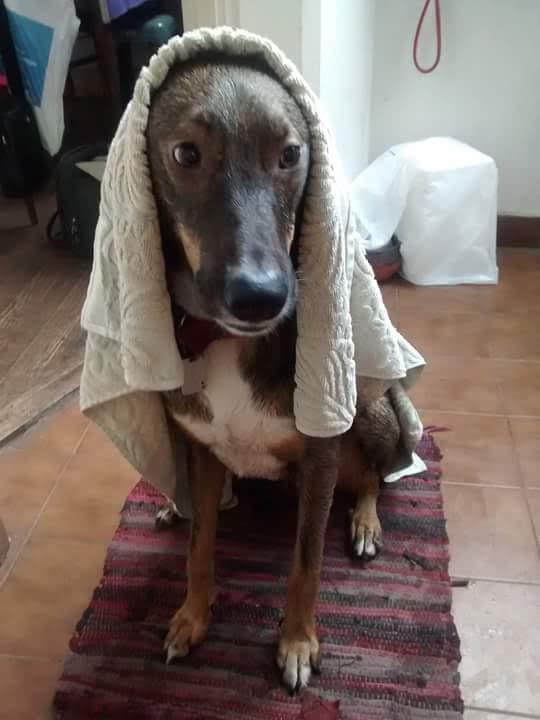 pension canina la brava mascotas (95)