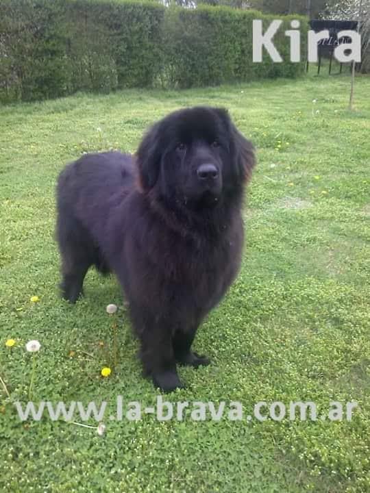 pension canina la brava mascotas (97)
